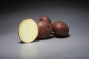 Семенной картофель немецкой селекции